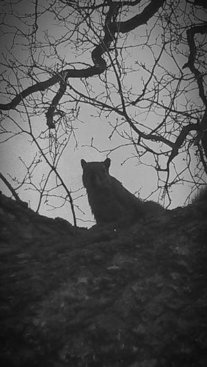 Hanging Out Taking Photos Peekaboo Squirrel! Naturephotography