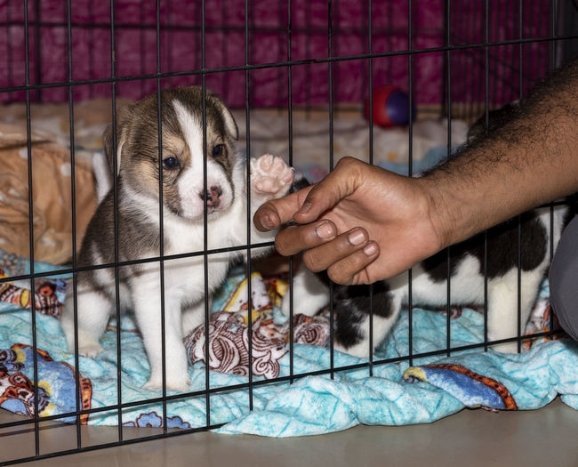 Human hand holding puppy at home