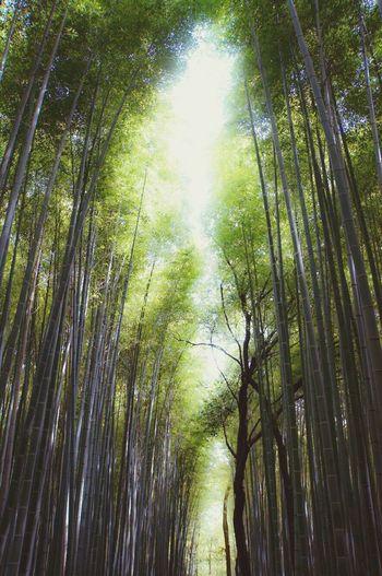 Arashiyama bamboo forests, Kyoto Arashiyama Bamboo Grove Kyoto Japan Photography Japan