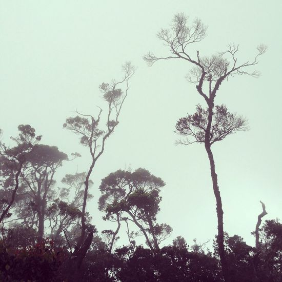 The Ballet Nature Art Trees Ballet