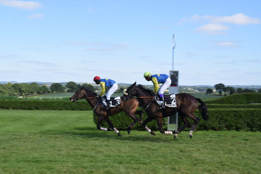 Day At The Races Competition Horse Horse Photography  Horse Races Horse Racing Horse Riding Jockey Place Your Bets Race Day Sports Photography