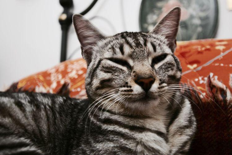 Close-up of cat lying on floor