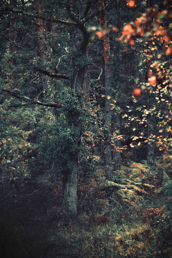 magical forest Forest Art Outdoors Countryside Landscape Taking Photos Taking Pictures Eye4photography  EyeEm Best Shots Nature_collection Nature Getting Inspired Getting Creative Tree Tranquility Tranquil Scene Scenics Freshness Foliage Tree Backgrounds Full Frame Close-up Abstract Backgrounds