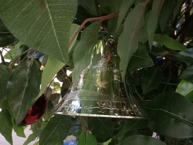 Christmas bell decoration Christmas Decoration Christmas Ornament Christmas Bell Christmas Spirit Green Color Growth Spider Web Leaf Nature Day Outdoors Close-up
