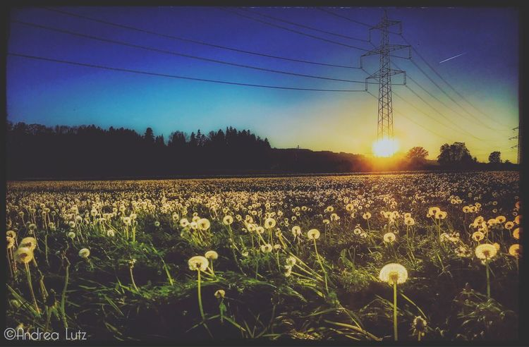 Esslingen Ontheway Feld Pusteblumen Iphonephotography IPhone Sunset Springtime Outdoors Landscape Nature Photography Beauty In Nature