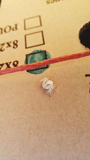 Outdoors Spider Spiders Spider Macro Macro Macro Photography Arachnid Close-up EyeEm Best Shots - Nature EyeEmNewHere Kelowna British Columbia Canada