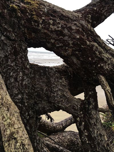 Abstract Nature Shapes In Nature  Close-up Tree Trunk Tree Ancient Outdoors Beauty In Nature Climbing Scenery Backgrounds Nature Growth Scenic Abstractions In Nature Trees Beach Background Scenics