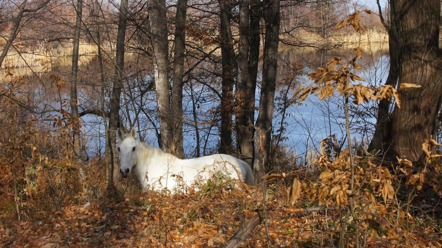 White Horse in Forest Animal Themes One Animal Domestic Animals Bare Tree Tree No People Nature Outdoors Beauty In Nature Day Wildlife Wildlife & Nature Wildlife Photography Forest Horse White White Horse
