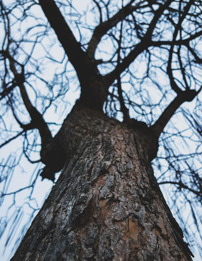 Tree. Tree Tree Trunk Branch Nature Bare Tree Tranquility Pinaceae Low Angle View Beauty In Nature Day No People Sky Full Length Close-up Clear Sky Outdoors