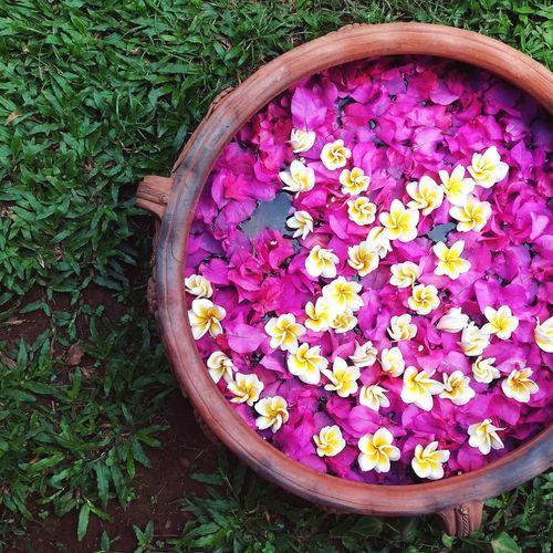 Vibrant 🌸 Flowers VSCO VSCO Cam Vscogoodshot Indiapictures India POTD
