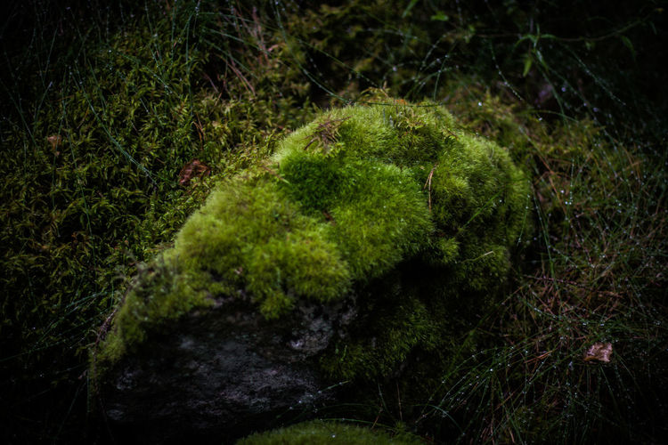 High angle view of moss on rocks in forest