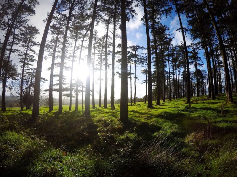 Doneraile Tree Nature Forest Sun Sunbeam First Eyeem Photo