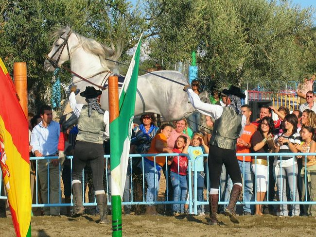Beware low flying horses in Andalucia Spain Andalusian Horse Horse Spanish Horses Horse Display Colour Of Life Andalucia Rural Awehaven's Andalucia