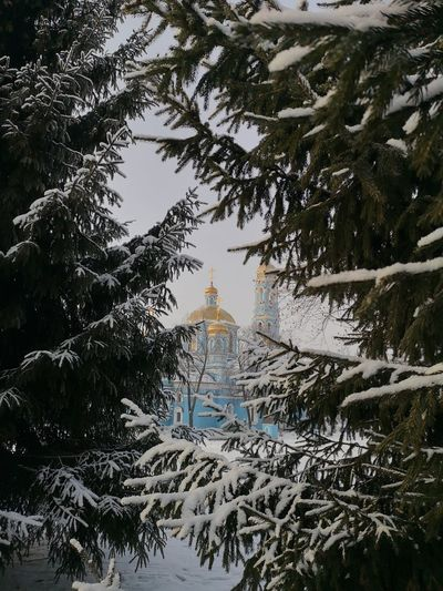 Trees and buildings during winter