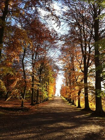 TheTransition Autumn Beautiful Relaxing Soothing Atmosphere Trees Nature