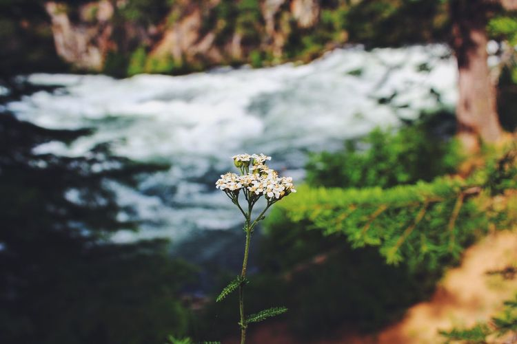 calm above chaos Flower Flowerporn River Nature Nature_collection EyeEm EyeEm Best Shots EyeEm Nature Lover EyeEm Best Edits EyeEm Gallery EyeEm Best Shots - Nature Foreground Focus Focus On Foreground Oregon Oregonexplored