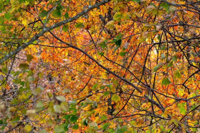 Autumn Colors Canon EOS 60D Autumn Tree Plant Change Orange Color Beauty In Nature Nature