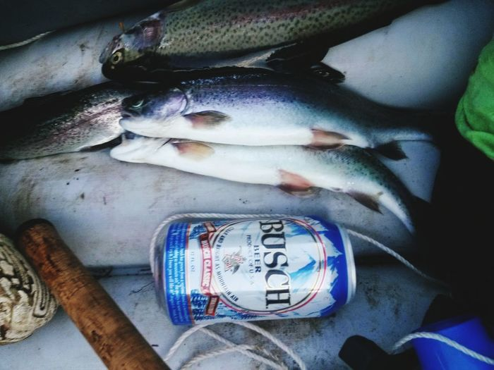 One Person People Indoors  Adult Day Close-up Troutfishing Fishing Time Love To Fish Trout Fishing Trout Fishing Boat Beer Time Beer O'clock Love Oregon Cold Temperature Beauty In Nature Outdoors Boat Ride Eat Me...Now! Eat And Drink Beer N Sail Fishermen's Life Fishing Life Nature