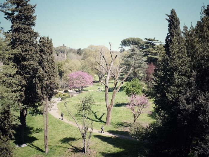 Roman Spring Blossom Springtime Beauty Pathway Urban Park Plant Growth Sky Nature Tree Beauty In Nature No People Clear Sky Tranquility Green Color Tranquil Scene