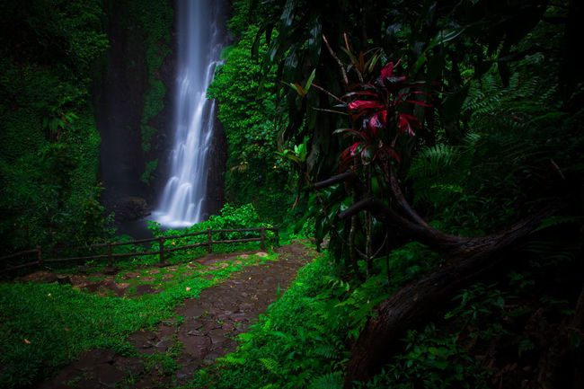 putuk truno Gogreen Green SaveNature Landscapephotography Putuktruno Putuktrunowaterfall Longexposures Prigen Pasuruan Landscape Explorepasuruan Waterfall Green Color Tree Nature Outdoors Long Exposure Forest Motion Water Beauty In Nature No People Scenics Beauty Freshness