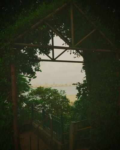 Mumbai behind the green Green Sea Mumbai