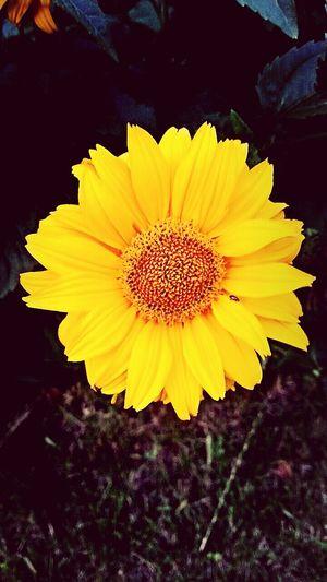 Flower Beautiful ♥ Summer! ♥ First Eyeem Photo