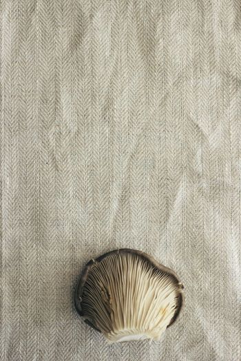 Cooking Cooking At Home Farm Freshness Lines Minimalist Brown Chef Close-up Cookbook Day Food French Minimal Mushroom Nature No People Pattern Soup Soup Time  Still Life Studio Shot Textured