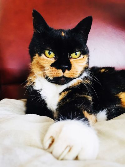 Kat chat cat Katze Cat Portrait Animal Portrait Animal Claw Spotted Cat Old Cat Cat Animal Themes Pets Feline Mammal One Animal Domestic Animals Whisker Looking At Camera