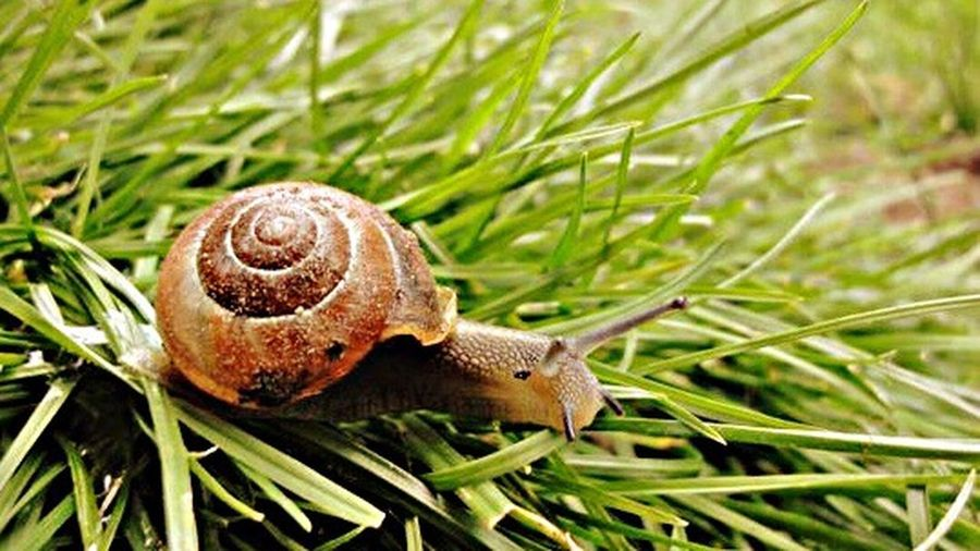 Close-up of snail on grassy
