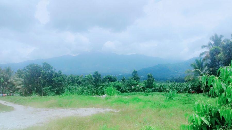Grassland Green