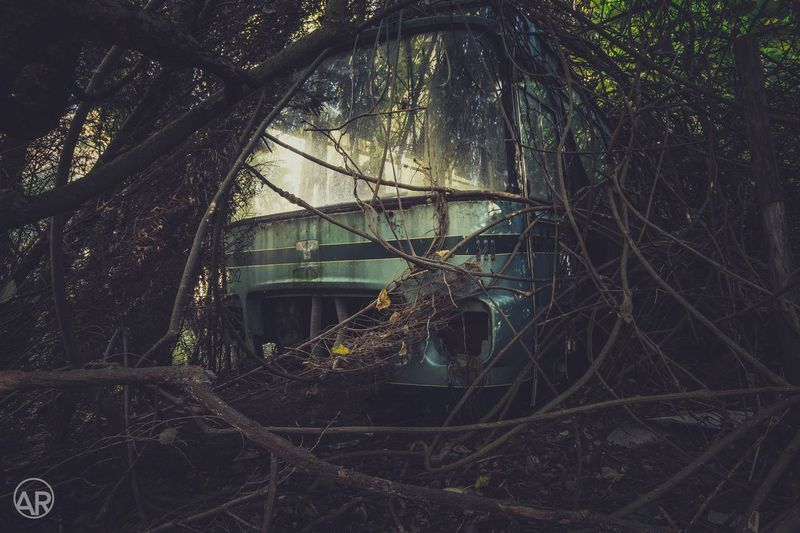 An abandoned bus, on an abandoned place in the woods in Belgium Tree Abandoned No People Branch Plant Built Structure Forest Architecture Outdoors Nature Day Canon Urbex Woods Bus First Eyeem Photo EyeEmNewHere Secret Spaces