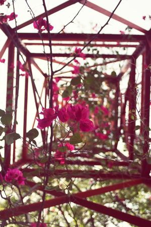 Flower Growth Nature Freshness Beauty In Nature Pink Color Fragility No People Close-up Springtime Flower Head Mobile Tower Network Tower Low Angle View Cellphone Tower Tower Towers View EyEmNewHere EyeEm EyeEm Gallery EyeEmNewHere EyeEmBestPics WallpaperForMobile EyeEm Masterclass EyeEm The Best Shots Millennial Pink