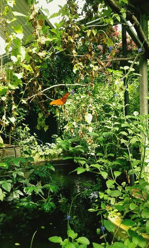 Butterflyworld Nature Green Color Beauty In Nature Fragility Outdoors Freshness Sunlight Tree