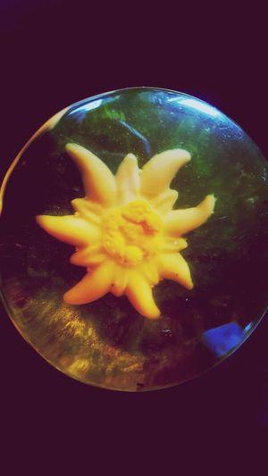 Leontopodium Alpinum Bestflowershot