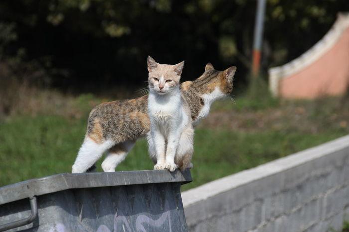 Pet Portraits Animal Themes Domestic Animals Domestic Cat Looking At Camera Neugierig Pets Portrait Wer Kommt