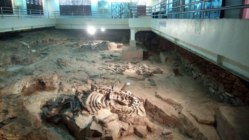 fossil Dinosaur Fossil Museum Architecture High Angle View Sand Built Structure No People Outdoors Day