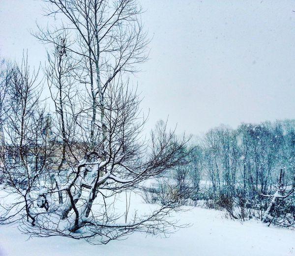 Snowy. Japan