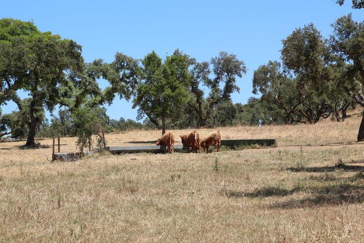 Horses grazing on field against sky
