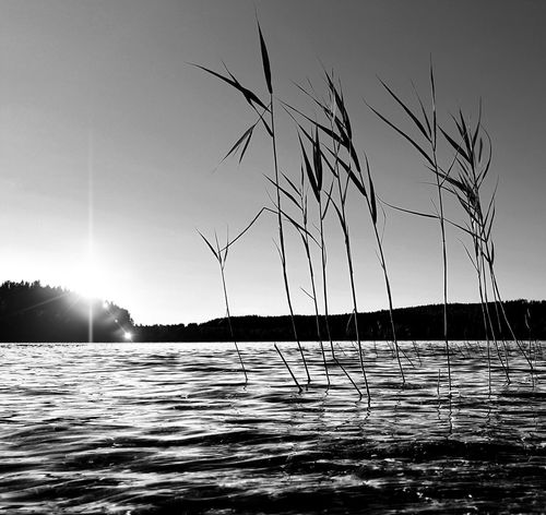 Grass Nature Nature Photography Reflection Sunlight Beauty In Nature Black And White Black&white Blackandwhite Blackandwhite Photography Horizon Over Water Nature_collection Reflections In The Water Sky Sun Sunlight, Shades And Shadows Water