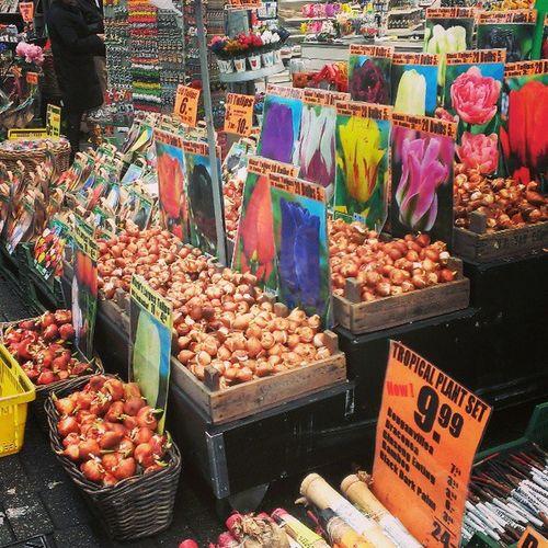 シンゲル花市。日本は検疫が厳しいから球根を買っても没収されちゃうとのこと。。。(T T) Amsterdam Iaminamsterdam Tulip Souvenier