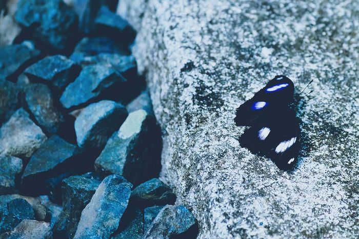 Rock and a hard place Blue Moon Butterfly Insects  Bugs Things With Wings  Blue Nature Nature Photography Nature_collection VSCO