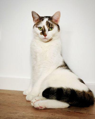 Majestic Cat 👑