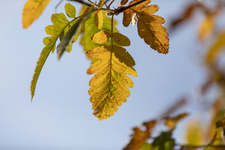 Close-up of leaves on tree during autumn