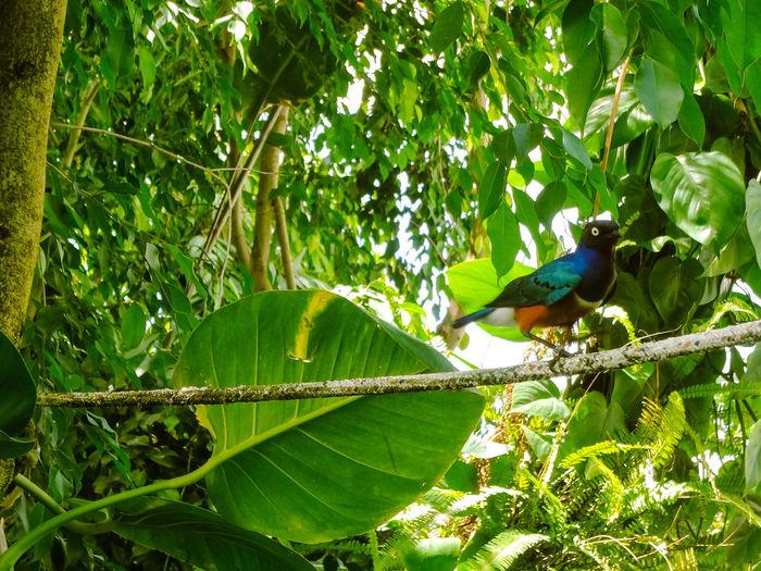 Exotic bird in