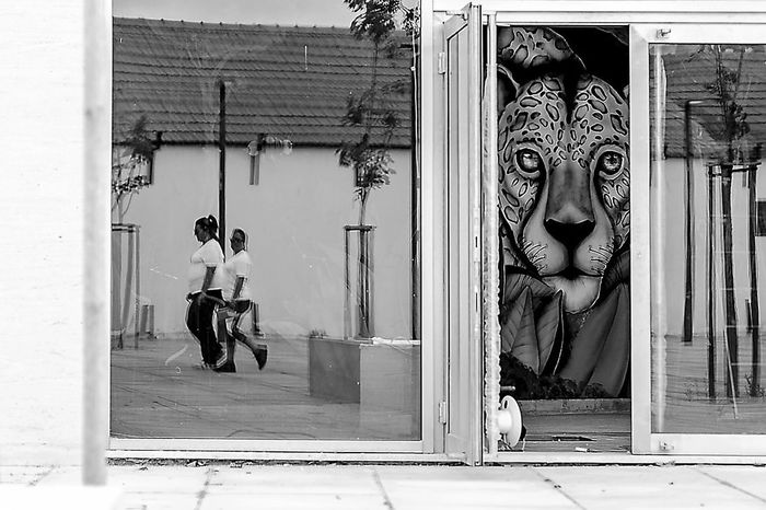 Animal Fotografia Fotografiadeautor Fotografiaderua Interação P&B Painting Photography Pintura Pretoebranco Street