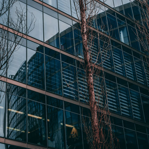Berlin Berlin Photography Architecture Bare Tree Branch Building Building Exterior Built Structure City Day Full Frame Glass - Material Low Angle View Modern Nature No People Office Office Building Exterior Outdoors Plant Reflection Tree Window