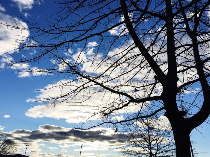 Trees And Sky Conder Canberra Hidden Gems  Colour Of Life