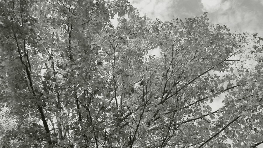 Nature Tree Outdoors Beauty In Nature Monochrome Photography Getting Away From It All Black And White Finding In A Peacful Place
