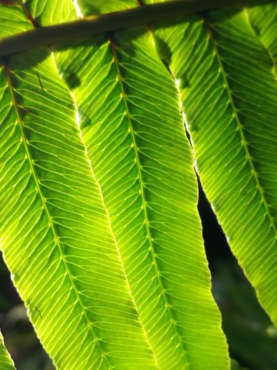 Green Color Close-up Growth Closeness Nature Beauty In Nature Freshness Leaf Veins