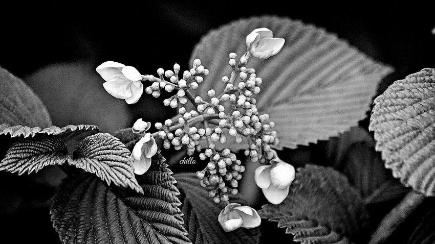 From beauty comes beauty. Blackandwhite Blackandwhite Photography Monochrome Macro EyeEm Best Shots EyeEm Nature Lover Flowerporn Eye4photography  The Purist (no Edit, No Filter) Sony A6000